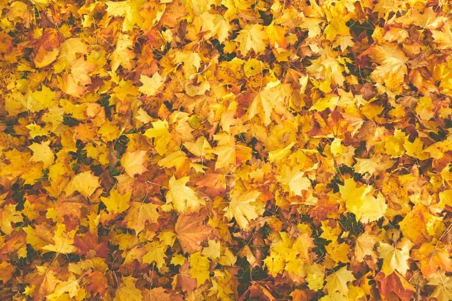 foglie-autunno